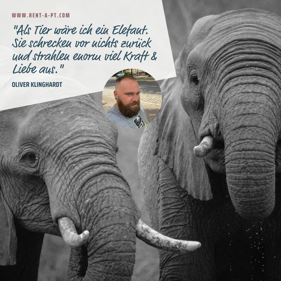 Elefanten, Personal Trainer, Selbstständigkeit, fitness